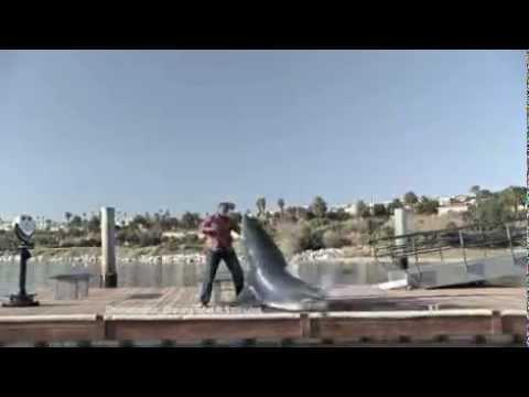Cá mập tấn công người trên bờ - giống cá hung dữ nhất biển cả