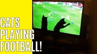 Funny cat videos: How to teach your kitten to play football and to hunt.