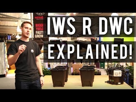 IWS R DWC Explained (Featuring Craig from NUT Systems) - YouTube