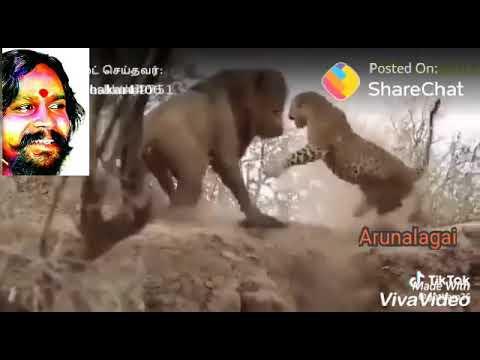 Mutharaiyar new Arunalagai