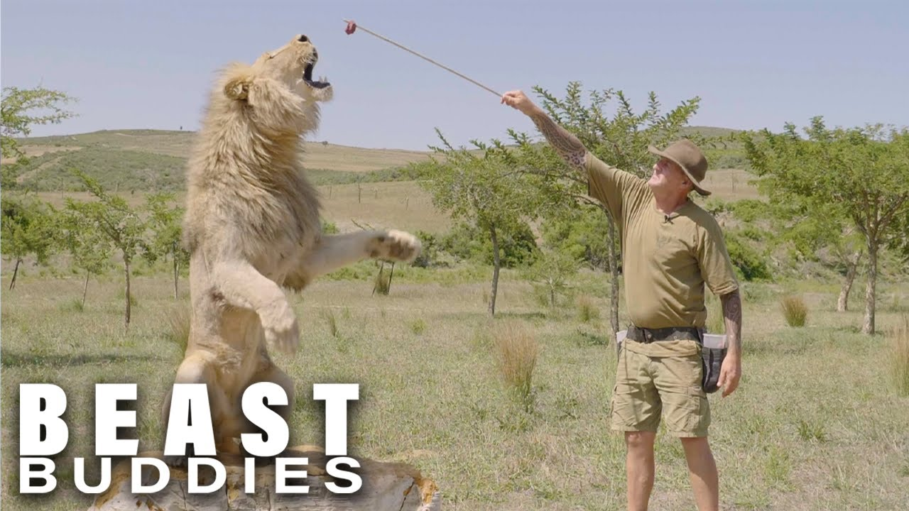 I Have 7 Lions And They've Tried To Kill Me | BEAST BUDDIES