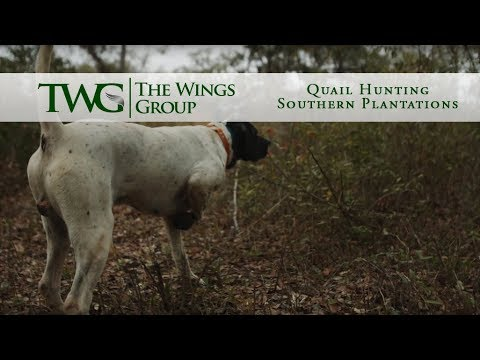 Quail Hunting - Southern Plantations