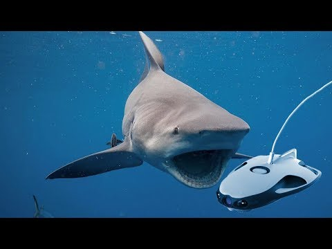 SHARK ATTACKS UNDERWATER DRONE!!