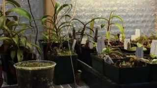 SUPPLEMENTAL GREENHOUSE LIGHTING FOR THE DARK DAYS OF WINTER - SAFETY FIRST!