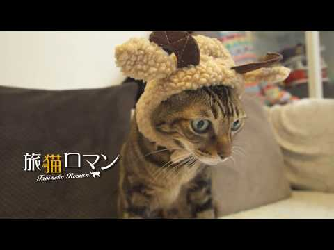 Awesome cat in Hong Kong! Featuring Cutest cat Letty DorDor and Tiger!
