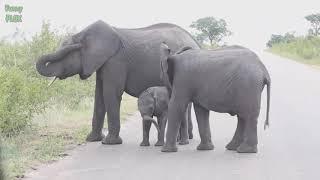 В мире животных  Забавные слонята