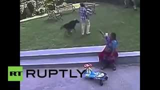 India: Toddler Savaged By German Shepherd In Public Park