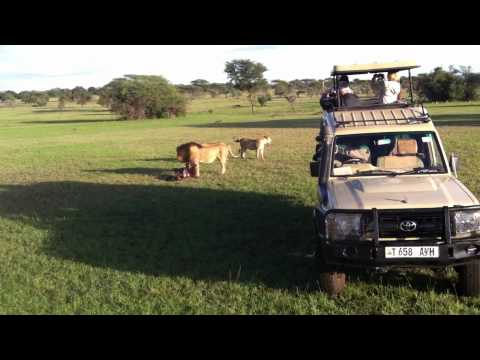 Athlone Travel (Jane Purdie) in Africa 2011 #2