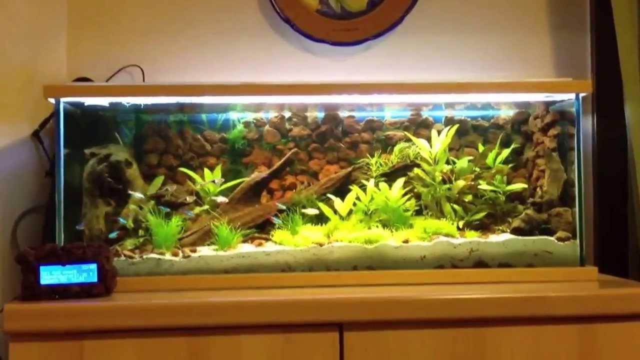 Acquario 60lt controllato da arduino youtube for Temperatura acquario