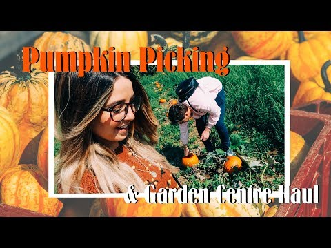 Pumpkin Picking & Garden Centre Haul