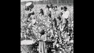 Structured Slavery for Negroes (1)