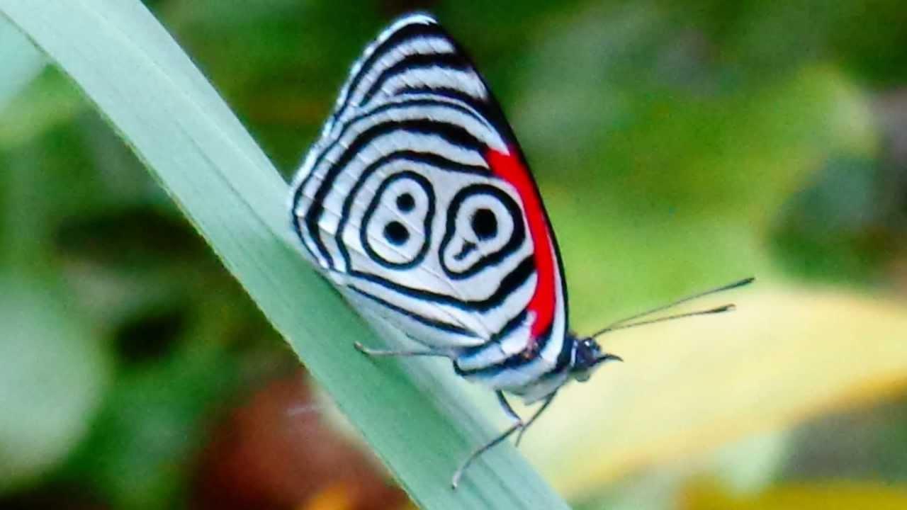 Mariposa Marca Per 250 Youtube