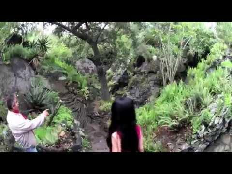 A Stroll Through the UNAM Botanic Gardens of Mexico City (Jardín Botánico)