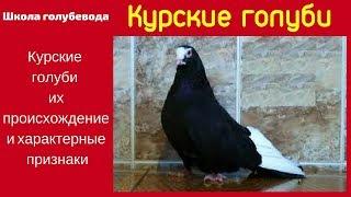 Школа голубевода Курские голуби
