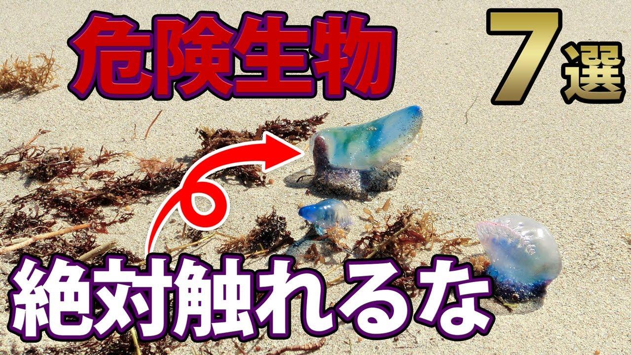 世界の実在する危険生物7選!