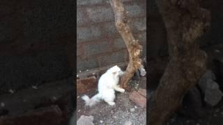 Merumani enjoying outdoors | satish lalit