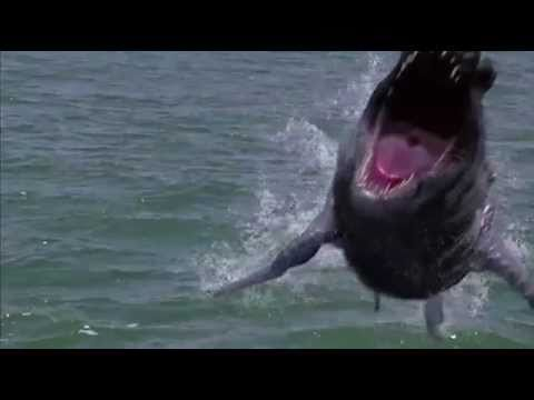 Dinoshark (2011) Official Trailer