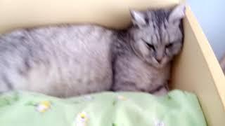 Когда твоя кошка не хочет вставать