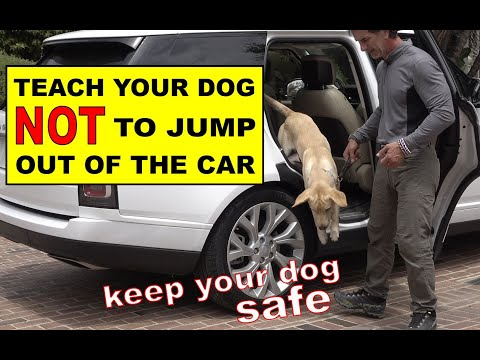 Teach Your Dog Not to Jump Out of the CAR - Car Safety - Dog Training Video