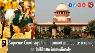 Supreme Court says that it cannot pronounce a ruling on Jallikattu immediately