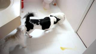 Toilet Training Our Dogs to Pee in Toilet