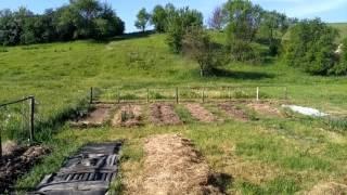 видео Органическое земледелие. Интенсивная посадка растений