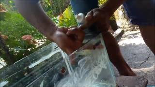 cara membersihkan kerak aquarium yang membandel itu mudah