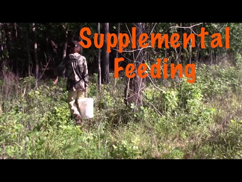 Spring time supplemental feed for our deer