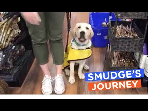 the dodo smudge guide dog