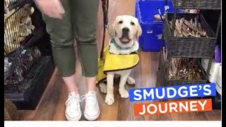 Guide Dog in Training Visits Pet Store: Smudge's Journey | The Dodo LIVE*