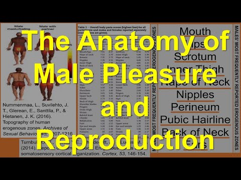 The Anatomy of Male Pleasure and Reproduction