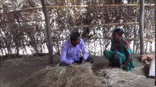 Cultivation of paddy straw mushroom _ Odia _ MSSRF _ Koraput_Odisha