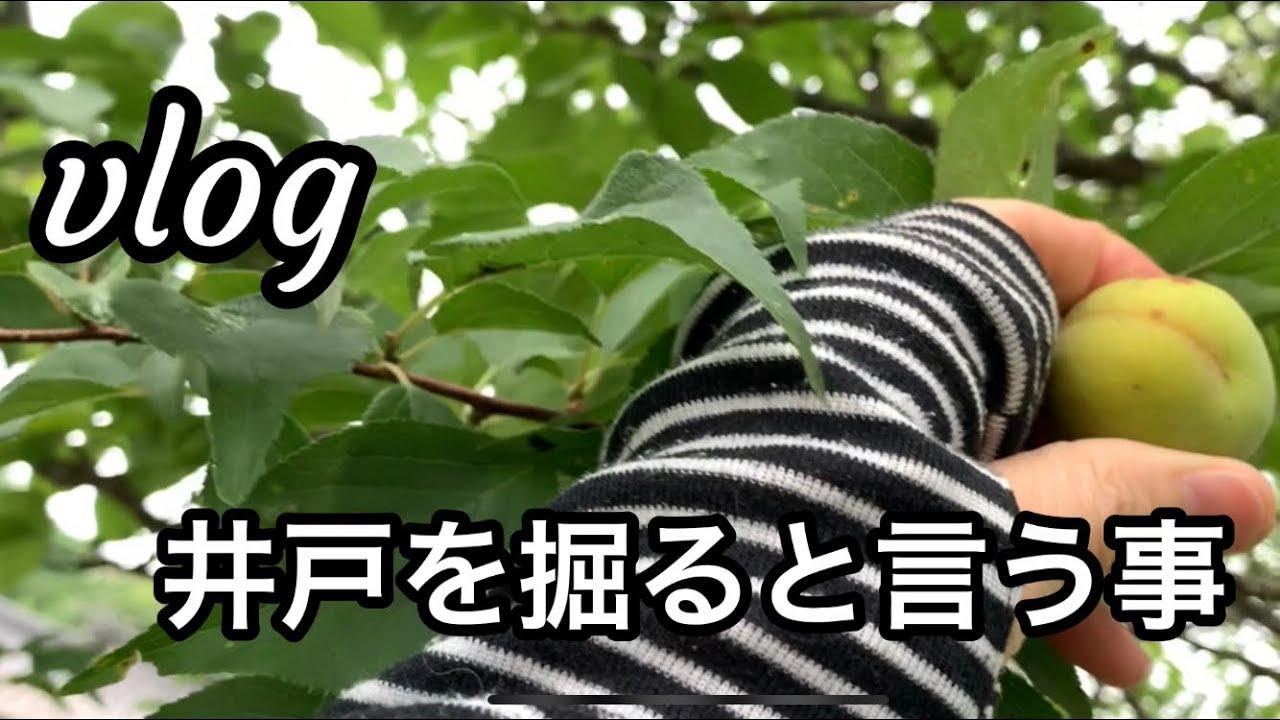 【vlog】いつもの朝/梅を摘む/井戸を掘りたい