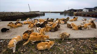 শহরে ছয় কোটি ইঁদুর তাড়াতে বিড়াল বাহিনী নিয়োগ || Apply cat forces to eliminate rats in the city