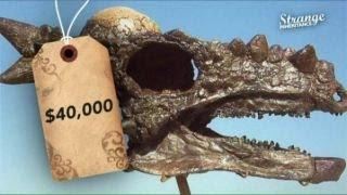 Digging up dinosaur gold