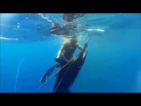 Spearfishing Cabo Verde - Blue Water Hunting Marlin, Wahoo And Amberjack