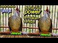 Ekor Kembang Vokal Tembus Kapas Tembak Jamrud  Mp3 - Mp4 Download