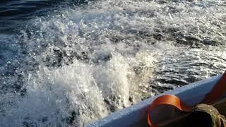 9.8 к. с і купа вражень від риболовлі