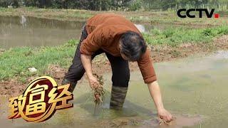 《致富经》 20200602 现代农夫 米里淘金| CCTV农业