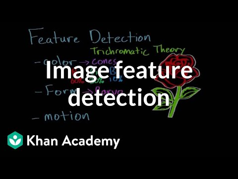 Vision: Feature Detection and Parallel Processing