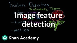 Feature detection and parallel processing | Processing the Environment | MCAT | Khan Academy