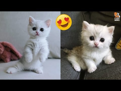This Cute Kitten Will Light Up Your Day With Happiness