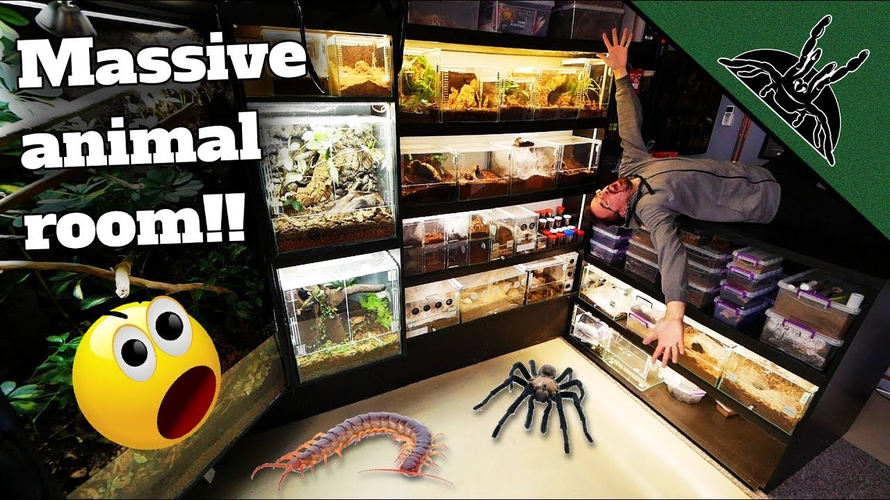 all-of-my-animals-150-full-animal-room-tour