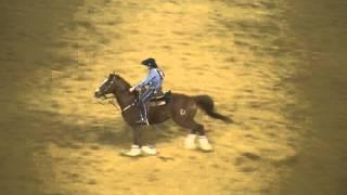 Соревнования техасских скотопромышленников!