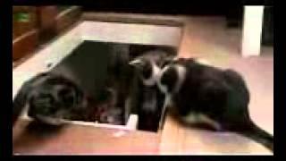 ►►  Смешные коты 2013 лучшее