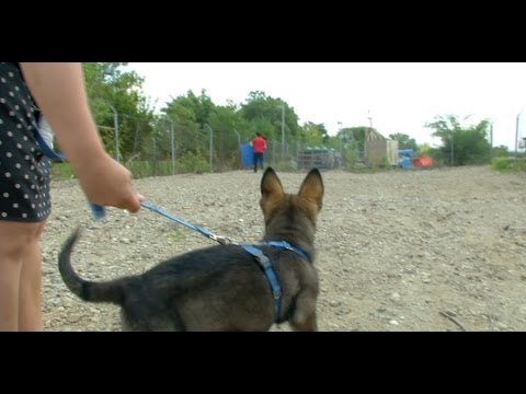from-obedience-to-agility:-a-day-in-the-life-of-a-service-dog-in-training