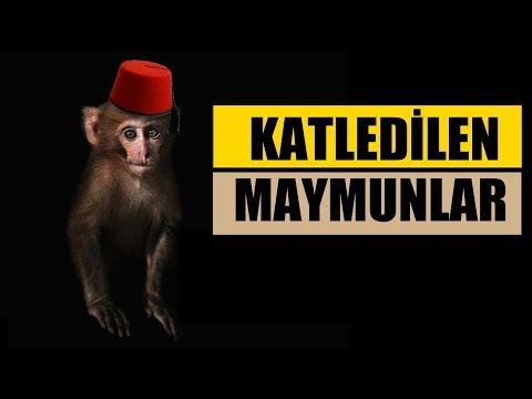 Osmanlıda Maymunlar Neden İdam Edildi?