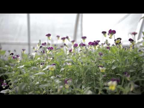 Wedderspoon Herb Farm
