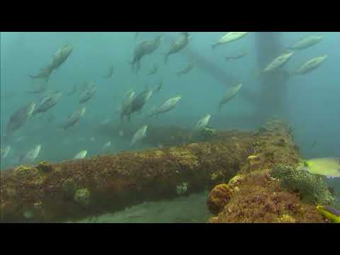 Sharks in the Atlantic Cam 05-22-2017 10:00:07 - 10:59:53