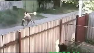 Angry pit bull dogs tear man apart
